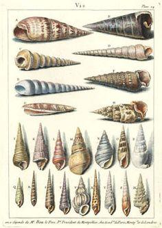 The Antiquarium - Antique Print & Map Gallery - Sea Creatures