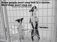Some people won't step foot into a shelter.  MOST adoptable, loving, healthy pets won't step out of the shelter.  Millions die due to homelessness.. *Please Spay, Neuter & Save a Life ~ Adopt from shelter/rescue ♥