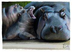 Hippos sketch