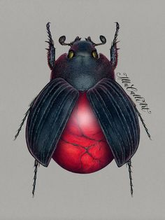 I Drew Beetles That Hide Colourful Minerals Underneath Their Shiny Wing Cases Cool Insects, Bugs And Insects, Beetle Insect, Insect Art, Faber Castell Polychromos, Bug Art, Art Folder, Beautiful Bugs, Nature Animals