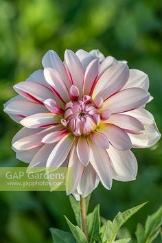 Penny Lane, Belleza Natural, Garden Plants, Om, Flora, Outdoors, Stock Photos, Photography, Nature Photography
