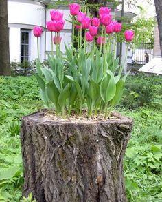 Stumps are us! Great idea!