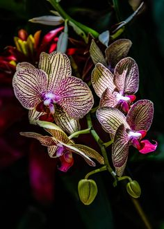 WONDERFUL ORCHIDS