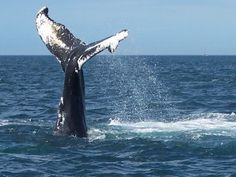 Nova Scotia Whale Watching – Mariner Cruises, Brier Island - amazing!!!  #indigo #perfectsummer