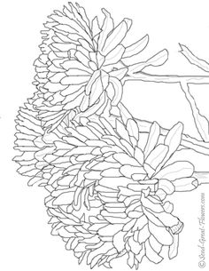 Chrysanthemum Flower Online Coloring Page Goes Along With The