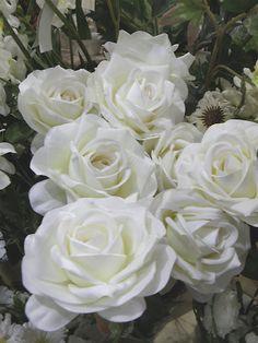 White Roses!