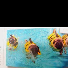 Pug swim class