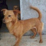 Adozione cani - Cindy, Una Dolcissima Mini Cagnolina Da Adottare!