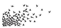 muchas aves volando - Buscar con Google