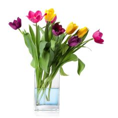 flowers-tulips-in-vase copy