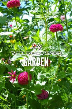 DIY Wildflower Garden: This super easy garden is a gorgeous addition to any home looking to grow food. Grow wildflowers at home. Organic Gardening Magazine, Organic Gardening Tips, Edible Garden, Easy Garden, Dubai Garden, Pots, Wildflower Seeds, Garden Types, Garden Living