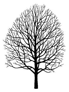A database that provides information on more than 200 native tree and shrub species, and on almost 300 insects and 200 diseases found in Canada's forests. Silhouette Images, Black And White Lines, Maple Tree, Tree Shapes, Trees And Shrubs, Tree Art, Tangled, Printmaking, Garden Design