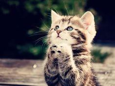 cute beautiful cat kitten   4loveimages