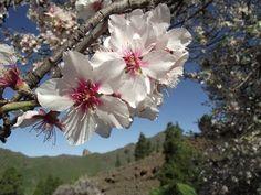 Teneriffa Wandern - Mandelblüten Rundwanderung
