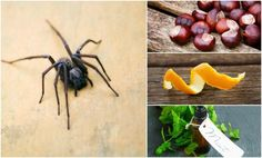 12 Natural Ways To Keep Spiders Out Of Your Home