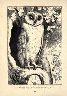 Mother Goose's Nursery Rhymes, Walter Crane, 1877 Vintage Owl, Vintage Images, Owl Artwork, Hey Diddle Diddle, Walter Crane, John Tenniel, Vintage Drawing, Owl Print, Mother Goose