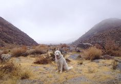 Nomadic Adventures of a Man and His Dog Highlight Their Bond - My Modern Met