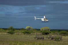 El vuelo para salvar a los rinocerontes | Ciencia | EL PAÍS