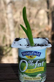 Plant your plant in a cup made from plants!