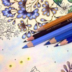 Jardim Secreto, azul, lápis de cor, cores, criatividade, teria com pinturas