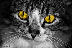 Cat Eyes by DanielleMiner.deviantart.com on @deviantART