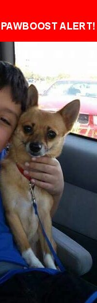 Please spread the word! Brownie was last seen in Laredo, TX 78043.    Nearest Address: Eastwoods Subdivision
