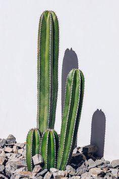 Pastel in Palm Springs - tessamino ❤ Jungle - Cactus Palm Springs, Cactus Planta, Cactus Y Suculentas, Viva Luxury, Deco Nature, Plants Are Friends, Cactus Flower, Cactus With Flowers, Cactus Pot