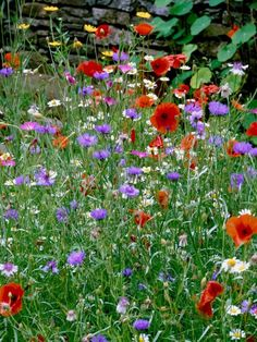 Learn how to use vibrant meadow flowers to decorate your lawn and garden spaces with these landscaping tips from HGTV.