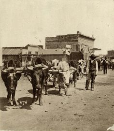 Oxen team hauling freight in old Las Vegas, NM from the 1880's. Palace of the Governors Photo Archives. #lasvegas #lasvegasnm #lasvegasnewmexico #newmexico #oldnewmexico