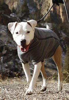 Protect your dog from cooler temperatures, so the two of you can resume trail running, hiking, and in-town excursions.