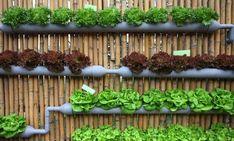 Вертикальный сад-огород. Идеи. Обсуждение на LiveInternet - Российский Сервис Онлайн-Дневников
