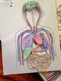 how to make a circulatory system model