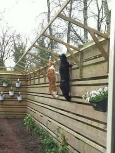 Incroyable meilleur chenil extérieur z.Katzen et chat WhatsApp drôles échouent 207 - Cuire une pizza avec gr. Cat Fence, Dog Proof Fence, Outdoor Cat Enclosure, Diy Cat Enclosure, Cat Run, Cat Playground, Playground Ideas, Cat Garden, Fence Garden