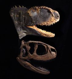 """Rugops primus reconstruction by Tyler Keillor Rugops (meaning """"first wrinkle face"""") is a genus of theropod dinosaur which inhabited what… Jurassic Park, Jurassic World, Dinosaur Fossils, Dinosaur Art, Reptiles, Mammals, Dinosaur Posters, Dinosaur Pictures, Face Wrinkles"""