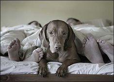 Manapság, egyre több gazdi alszik kutyájával egy ágyban. Felmérések támasztják alá, hogy akik kedvencükkel osszák meg ágyukat, nem tudják kipihenni magukat rendesen.  5 probléma, ha kutyával alszol egy ágyban A Mayo Clinic alvászavarokkal foglalkozó centrum vizsgálata szerint, a kutyával alvó…