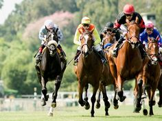 great horse racing backgrounds for computer wallpaper horse racing . Horse Racing Tips, Race Horses, Thoroughbred Horse, News Studio, Family Day, Computer Wallpaper, Paintings For Sale, Pet Birds, A Team