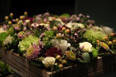 3. Plants - Brendan - Picasa Web Albums