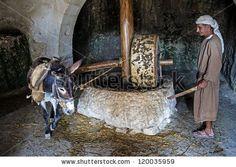Nazareth, Israele - 15 ottobre: Millstone & asino usato per la spremitura delle olive per fare l'olio d'oliva in 15 ottobre 2012 a Nazareth Village, una ri-creazione storica di Nazareth come era al tempo di Cristo