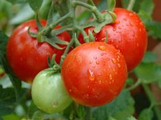 sweeter tomatoes with baking soda
