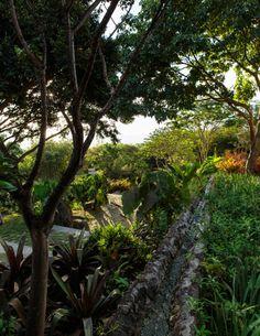 Caribbean Dream - Lonny Water Features In The Garden, Garden Features, Paradise Found, Pipe Dream, Green Photo, Plantation Homes, Love Garden, Tropical Garden, Indoor Plants