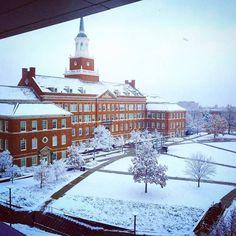 University Of Cincinnati, College Campus, Outdoor, Outdoors, Outdoor Games, The Great Outdoors
