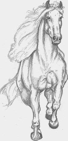Horse- Pencil drawing by Mukiya