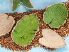 Cement Leaves | Step-by-Step | DIY Craft How To's and Instructions| Martha Stewart