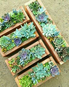 Succulent care - how easy is it to care for succulents? - Succulent care – how easy is it to care for succulents? You are in the right place about garden de - Succulent Gardening, Succulent Care, Succulent Terrarium, Container Gardening, Organic Gardening, Terrarium Ideas, Succulent Ideas, Succulent Boxes, Garden Planters