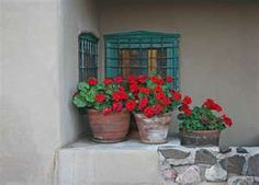 Geraniums are perfect for patios,balconies or roof gardens:they actually keep mosquitoes away so they say!