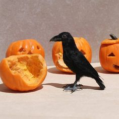 Miniature Realistic Raven  1:12scale  Dollhouse Miniatures