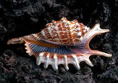 Shells are Swell – Beautiful Examples of Seashell Photographyby Warren Krupsaw