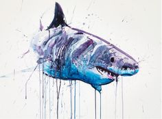 Image result for watercolor art shark