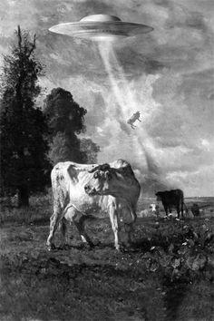 Eine Kuh wird weggebeamt.
