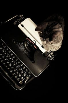 Pantone the cat and the magic typewriter